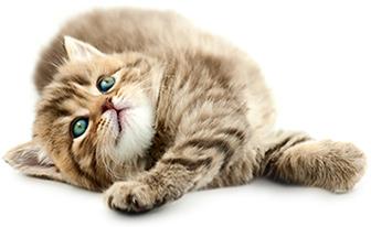 Cat Care Service