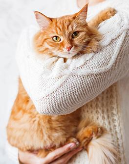 Cat Sitting Franchise