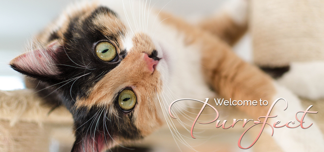 Welcome to Purr-fect