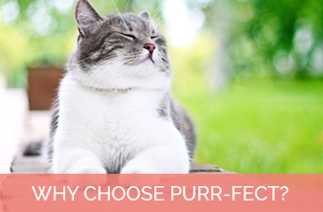 Why Choose Purr-fect?